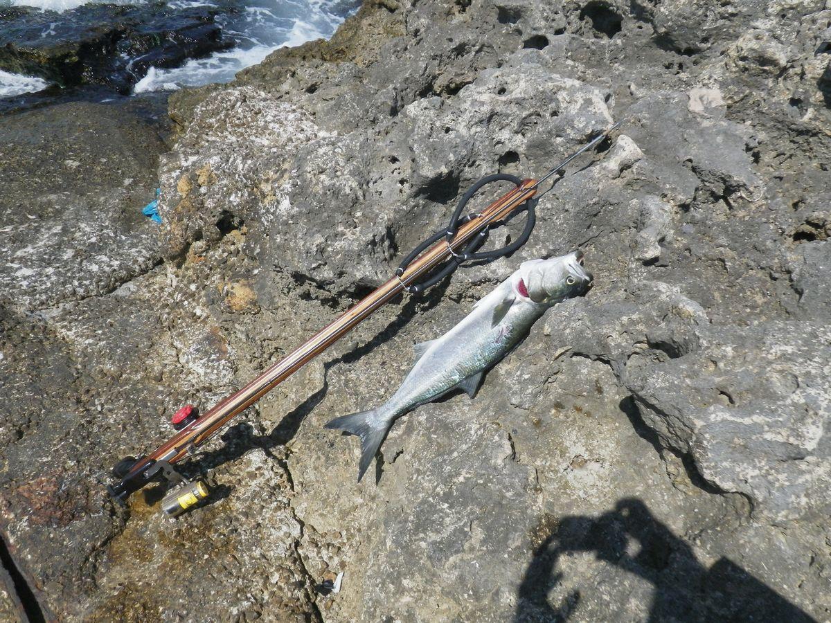 Come ti catturo il pesce serra pesca sub pesca in apnea - Come cucinare il pesce serra ...